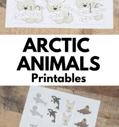 Arctic Animal Printable Packs for Preschool and Kindergarten - Royal Baloo [ 1102 x 735 Pixel ]