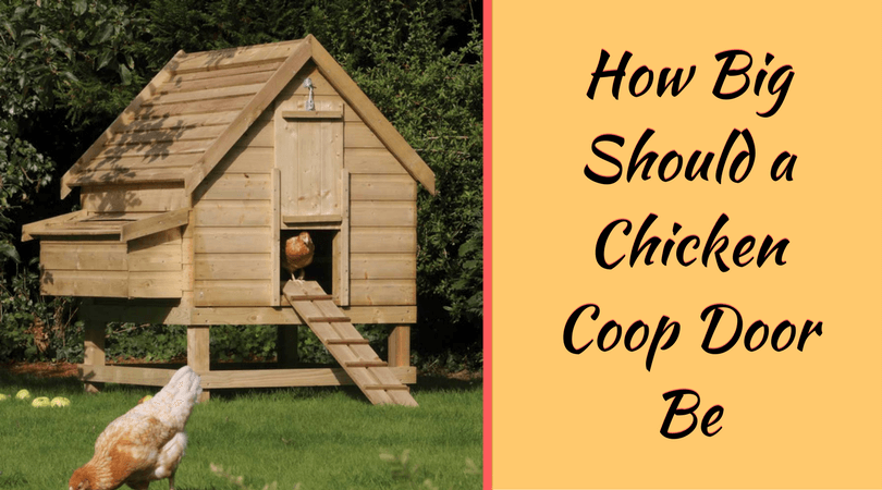How Big Should a Chicken Coop Door Be u2013 Exact Size Recommendation & How Big Should a Chicken Coop Door Be - Exact Size Recommendation