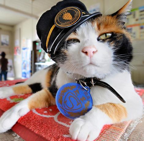 Huge economic impact ... Tama the cat.