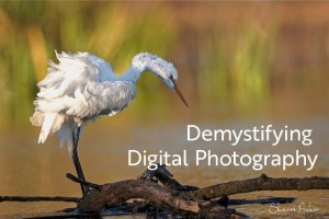 Demystifying Digital Photography: An Introduction @ Art in the Valley