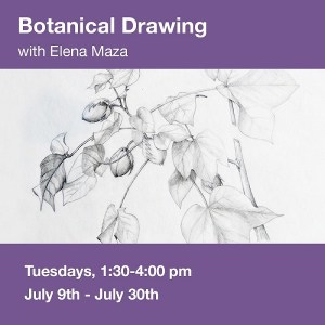 Botanical Drawing 1 @ Art in the Valley