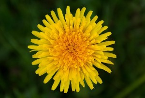 Summer Wild Edible Plants: Earth Connection Series @ Sky Meadows State Park