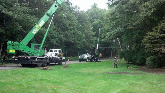 tree removal crane and bucket truck