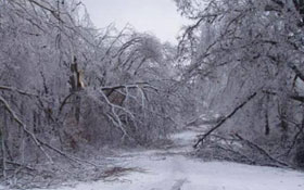 trees damaged by ice storm