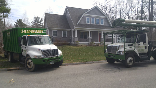 Tree removal in Seabrook, NH. Royal Green Tree Service