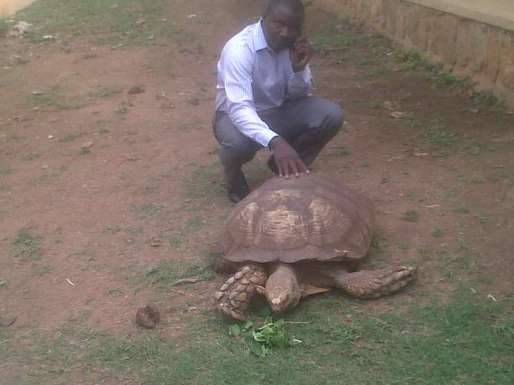 SAD... Oldest living creature in Ogbomoso, 334yr-old tortoise dies
