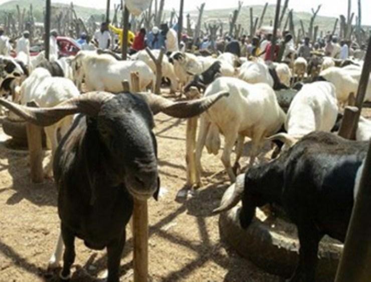 Eid-el-Kabir: Veterinarian urges Muslims to slaughter health animals