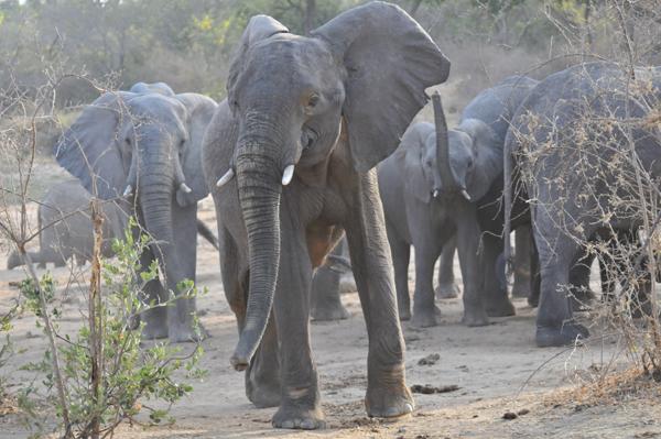 Group seeks preservation of Nigeria's elephants