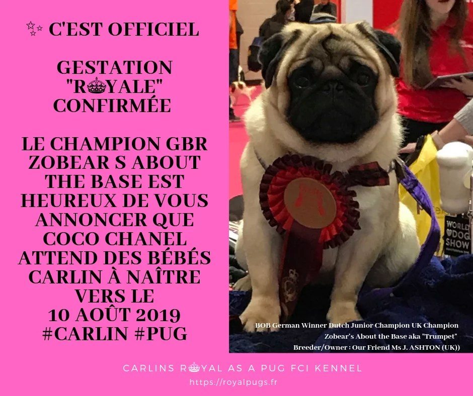 Portée Actuelle : Champion Zobear's About the Base « CTrumpet » et Line Celebrities Coco Chanel