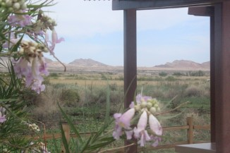 desert flowers at wetlands 2