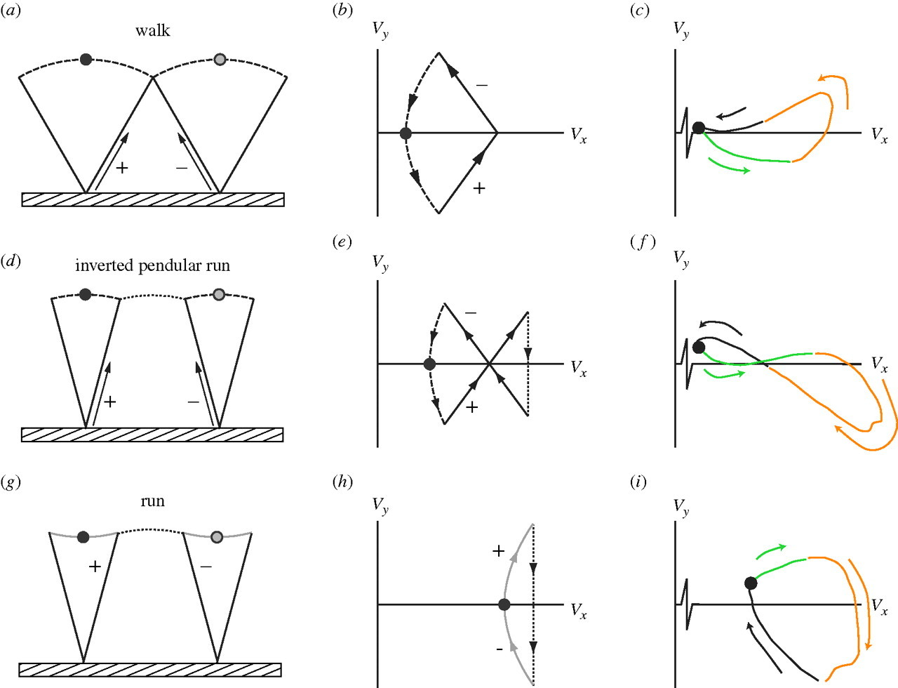 Inverted pendular running: a novel gait predicted by