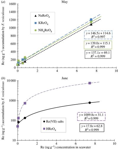 rhenium uptake and distribution