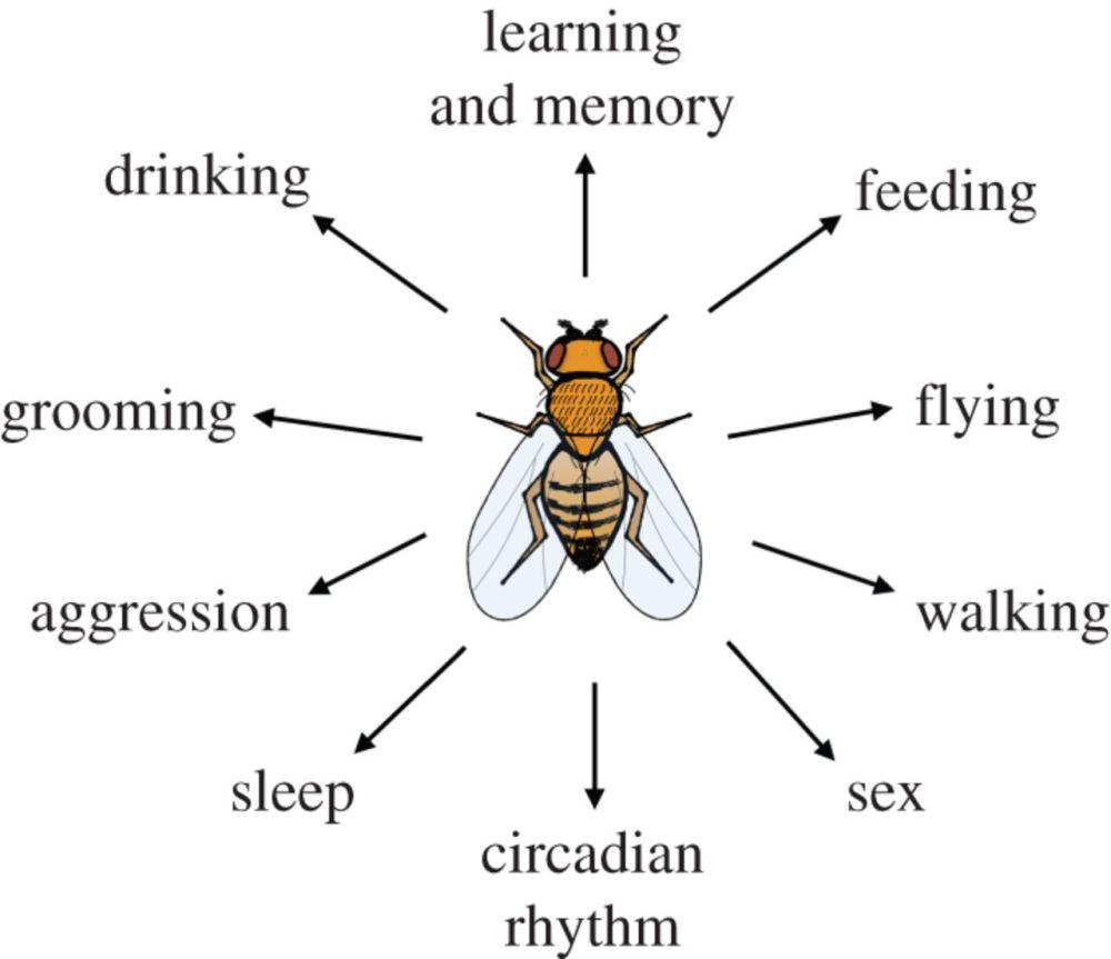 medium resolution of light heat action neural control of fruit fly behaviour fruit fly diagram label