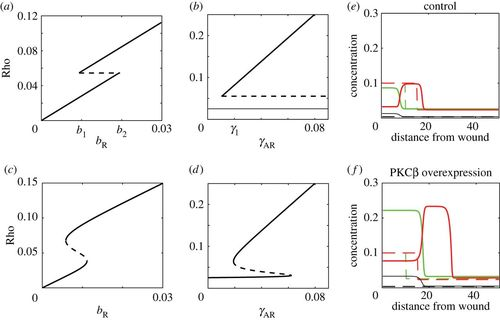 A mathematical model of GTPase pattern formation during