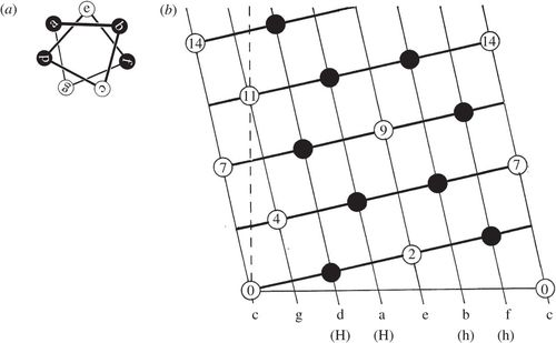 Geometric principles in the assembly of α-helical bundles