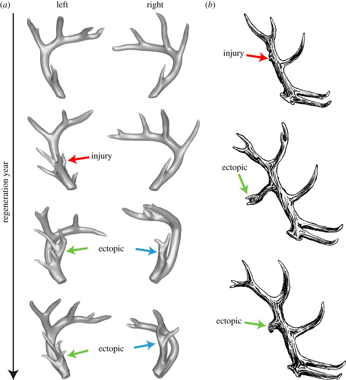 A Linear Encoding Model Explains The Variability Of The
