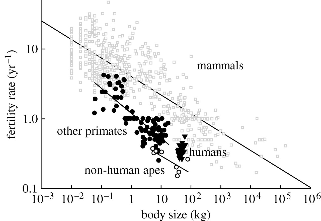 The trade-off between number and size of offspring in