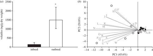 Inbreeding in horsenettle (Solanum carolinense) alters