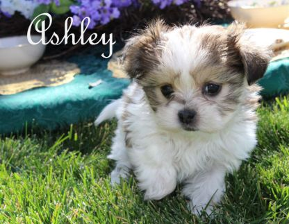 ashley-tea