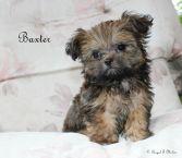 Baxter-1-6-25-17