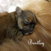 Bentley-10-days