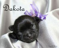Dakota-1.14.18-b-sm