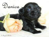 Danica-1.28.18-a-sm