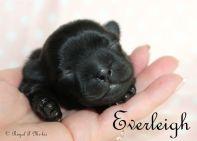 Everleigh-1.14.18-d-sm