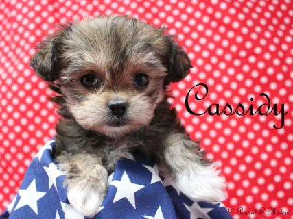 Cassidy-2-19-18-b-sm