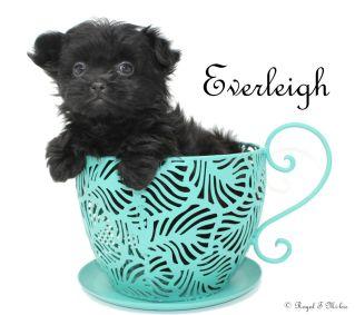 Everleigh-2-25-18-a-sm