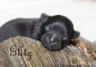 One week old