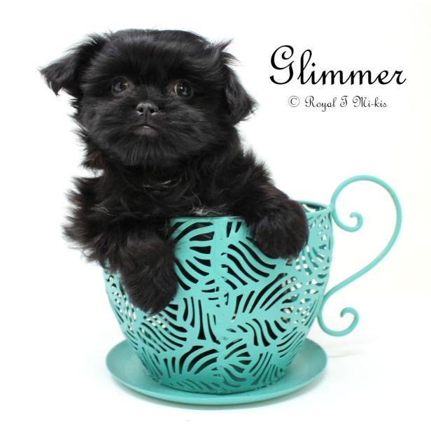 Glimmer_20181007_c