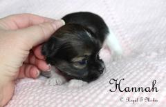 Hannah_Mi-ki_Puppy_20180830_4c