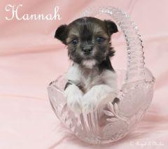Hannah_mi-ki_puppy_20180907_1c