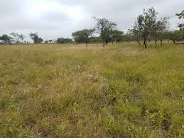 Kajiado County offers best land investment in Kenya