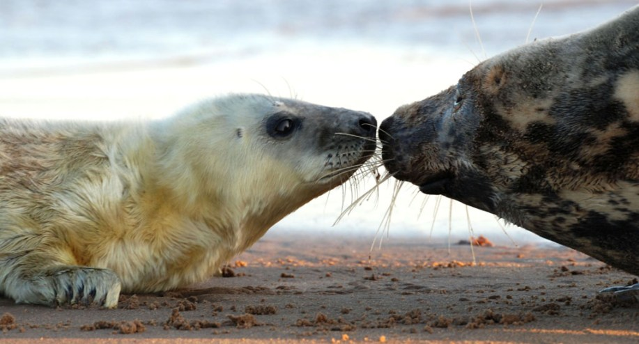 Mum and Pup