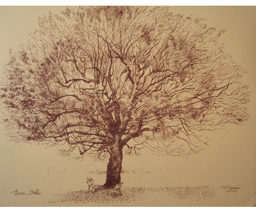 "Roy Superior, ""Tree in Lucca"""