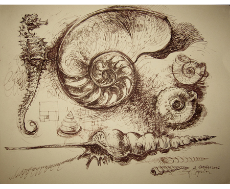 "Roy Superior, ""Seahorse and shell study"""