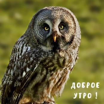 фото совы