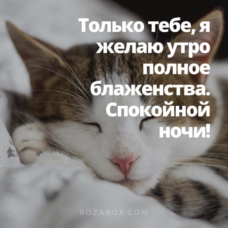 Скачать открытку с кошкой на ночь