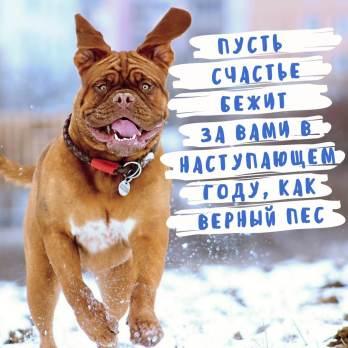 оригинальная открытка год собаки