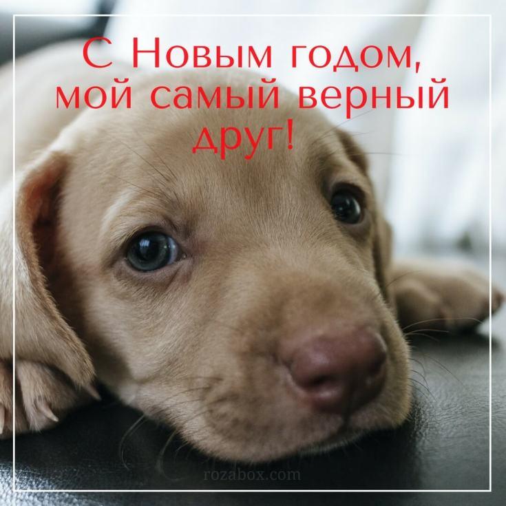 год желтой собаки поздравления