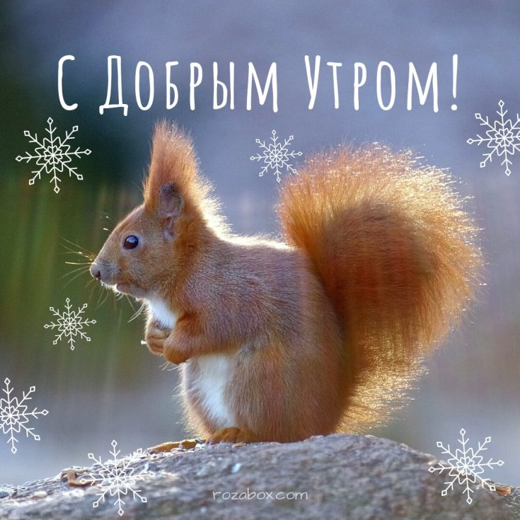 Прикол, открытки с животными пожелания зимние