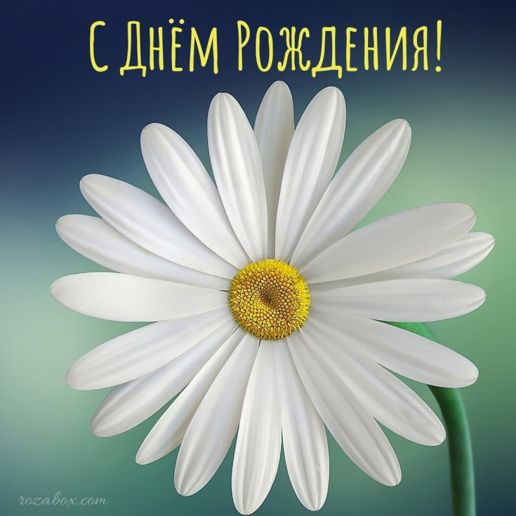 открытка с ромашками для подруги