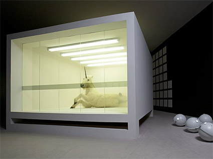 Could a glass box be the ultimate home improvement