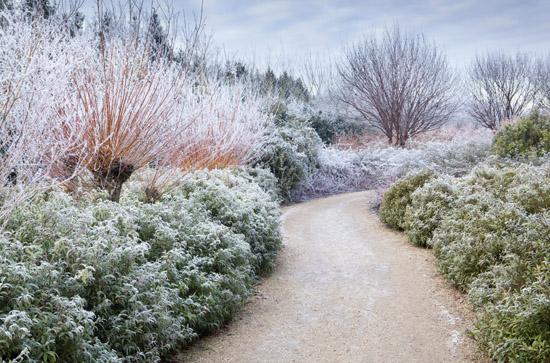 winter garden landscaping ideas