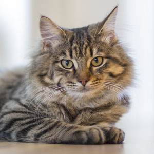 adoptable-cats.jpg?fit=300%2C300&ssl=1