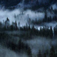 Im Nebel stochern (The Iron Lions)