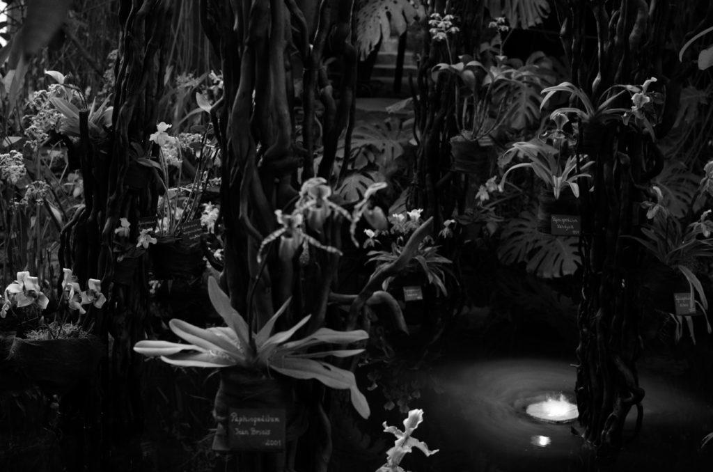 Photo noir et blanc. Serre du jardin des plantes à Paris. Des orchidées sont suspendues sur des arbres au-dessus d'eau.