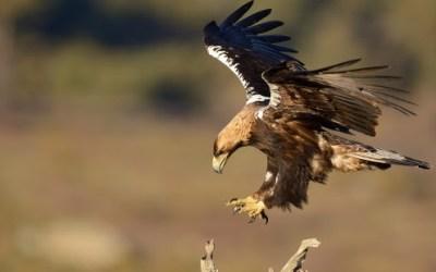 La sabiduría del águila – Josep Perich